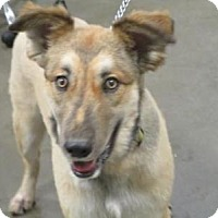 Adopt A Pet :: Kody - Union Grove, WI