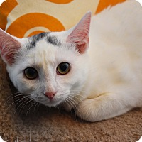 Adopt A Pet :: Blaze & Bo - Bristol, CT