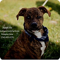 Hound (Unknown Type) Mix Dog for adoption in Zanesville, Ohio - Kismit - Urgent!