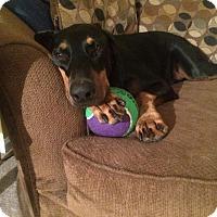 Adopt A Pet :: Dogbert - Lloyd, FL