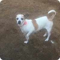 Adopt A Pet :: Joanie - Phoenix, AZ