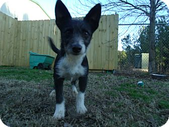 Terrier (Unknown Type, Small) Mix Dog for adoption in Gadsden, Alabama - Adler
