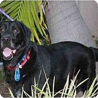 Adopt A Pet :: HARLEY - La Mesa, CA