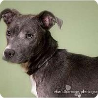 Adopt A Pet :: PANCHO - Phoenix, AZ