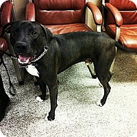 Adopt A Pet :: Huey - Scottsdale, AZ