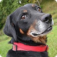 Adopt A Pet :: Bryson - Bakersville, NC