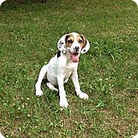 Adopt A Pet :: Scarlett - New Boston, NH
