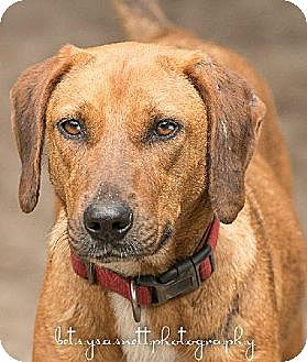 Hound (Unknown Type) Dog for adoption in Havana, Florida - Liz