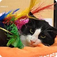 Adopt A Pet :: *PHARAOH - Sacramento, CA