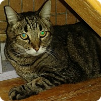 Adopt A Pet :: Dallas - Whittier, CA