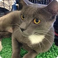 Adopt A Pet :: Annie - San Ramon, CA