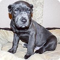 Adopt A Pet :: Grant - Sacramento, CA