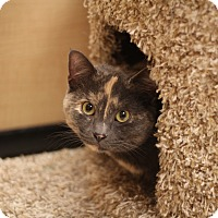 Adopt A Pet :: Rose - Richmond, VA