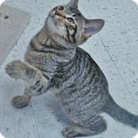 Adopt A Pet :: Felix - Chambersburg, PA
