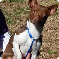 Adopt A Pet :: Buttercup(12 lb) Sweetie! - Sussex, NJ