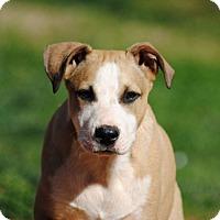 Adopt A Pet :: Buster - Lawrenceville, GA