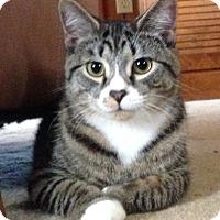 Adopt A Pet :: Nelson - Morganton, NC