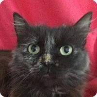 Adopt A Pet :: Maggie - Winchester, CA