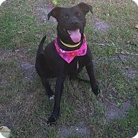 Adopt A Pet :: CAMILA - Poway, CA