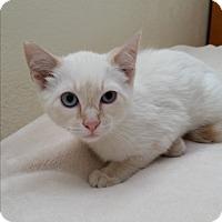 Adopt A Pet :: Nils - Modesto, CA