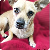Adopt A Pet :: Will - Pascagoula, MS
