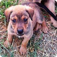 Adopt A Pet :: Jake - Waller, TX