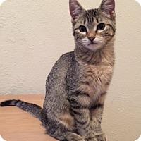 Adopt A Pet :: Tarasenko - St. Louis, MO