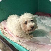 Adopt A Pet :: Crystal - Oak Ridge, NJ