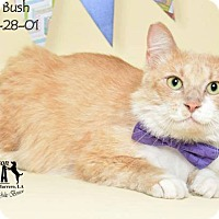 Adopt A Pet :: Walker Bush - New Orleans, LA