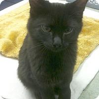 Adopt A Pet :: Menard - St. Louis, MO
