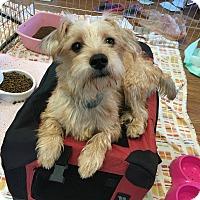 Adopt A Pet :: Kazy - Los Angeles, CA