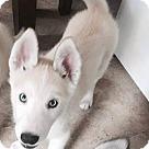 Adopt A Pet :: Sebastian - ON HOLD - NO MORE APPLICATIONS