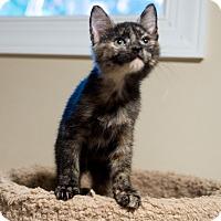 Adopt A Pet :: Penelope - Baltimore, MD