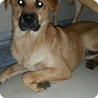 Adopt A Pet :: Nicholas - Westminster, CA