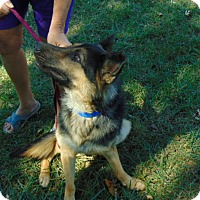 Adopt A Pet :: Luke - Greeneville, TN