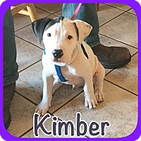 Bull Terrier Mix Dog for adoption in Ravenna, Texas - Kimber
