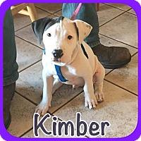 Adopt A Pet :: Kimber - Ravenna, TX