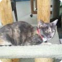 Adopt A Pet :: Tera - Englewood, FL
