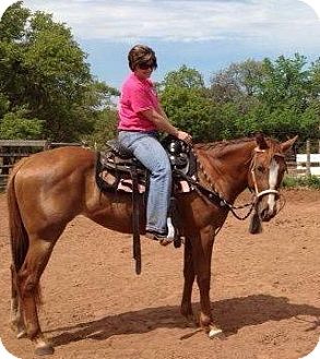 Quarterhorse Mix for adoption in Guthrie, Oklahoma - Lila