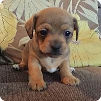 Adopt A Pet :: Jude (M) - Santa Ana, CA