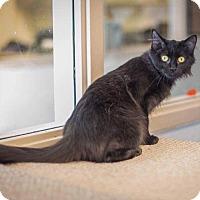 Adopt A Pet :: Sasha - Madionsville, KY