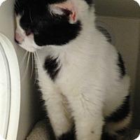 Adopt A Pet :: Trudi - Putnam Hall, FL