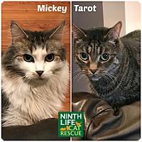 Adopt A Pet :: Mickey & Tarot - Oakville, ON