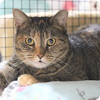 Adopt A Pet :: Kitty - Carlisle, PA