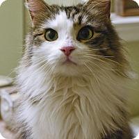 Adopt A Pet :: Prissy - Huntsville, AL