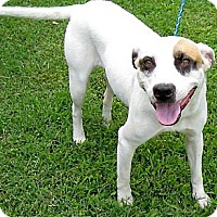 Terrier (Unknown Type, Medium) Mix Dog for adoption in Tahlequah, Oklahoma - Mandy