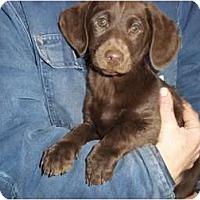Adopt A Pet :: Jordan - Adamsville, TN
