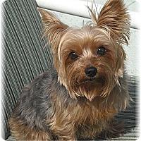 Adopt A Pet :: Tinker Bell - Palm City, FL