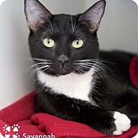 Adopt A Pet :: Savannah - Merrifield, VA
