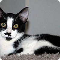Adopt A Pet :: Wilbur - St. Louis, MO